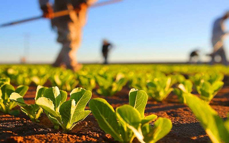 imagem-agricultura