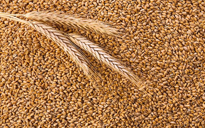 Queda na safra de grãos