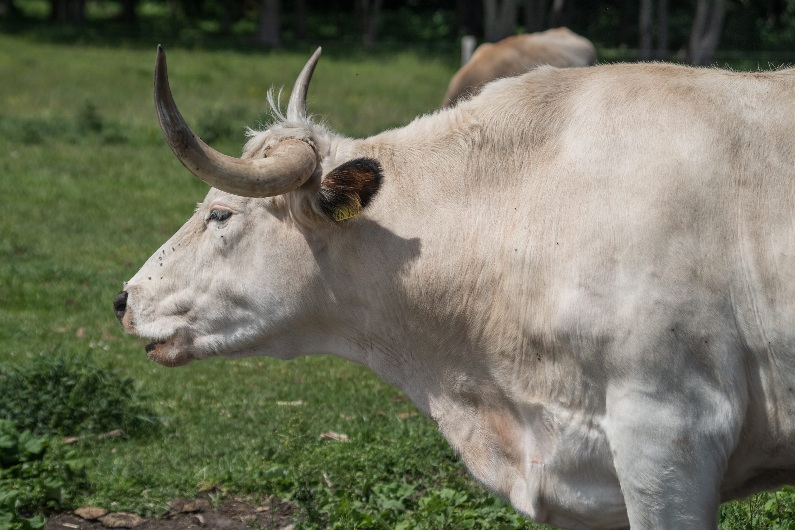 CEO do Grupo VMX, Carlos Cesar Floriano destaca abertura de importação de carne bovina para o Kwait