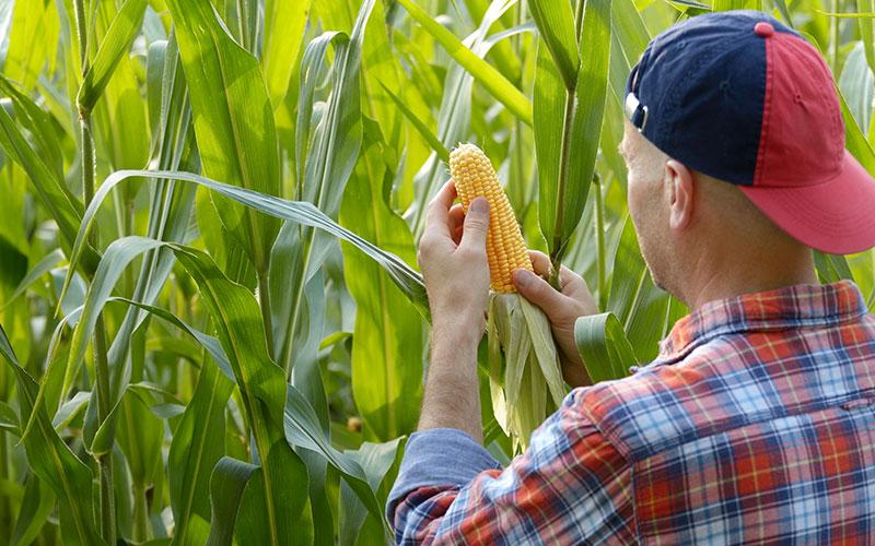 medidas governo ajudar trabalhadores rurais