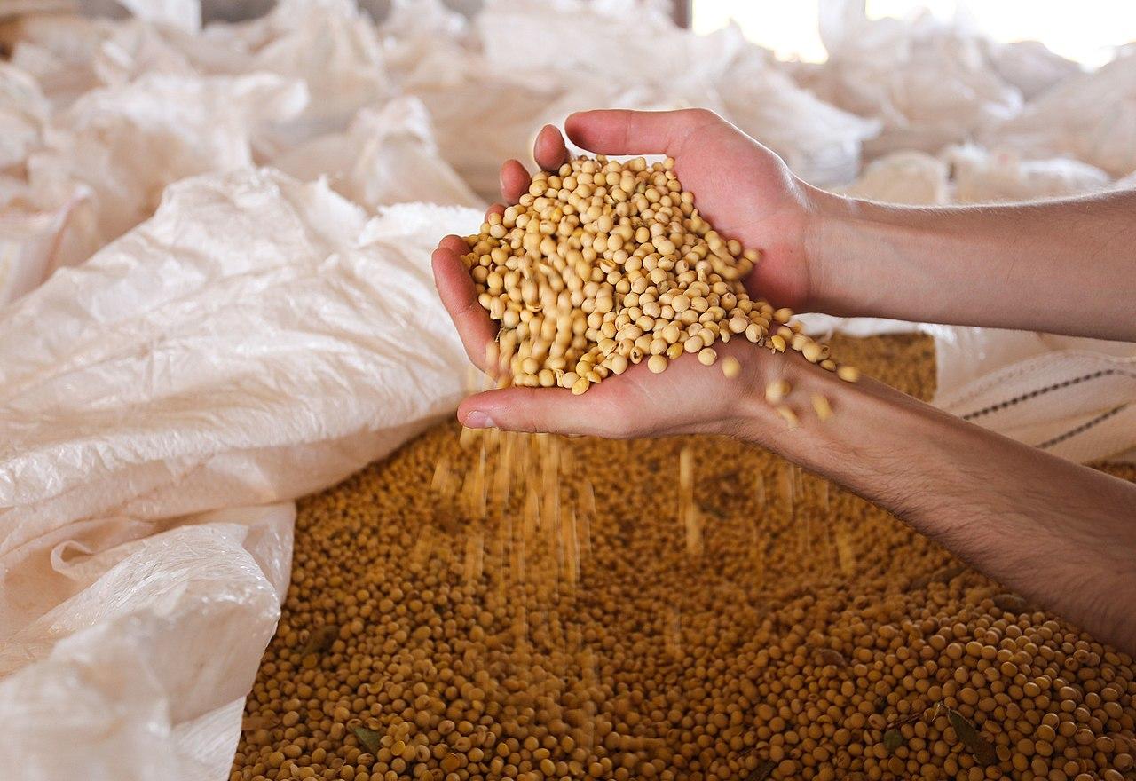 safra de grãos supera pandemia e mantém