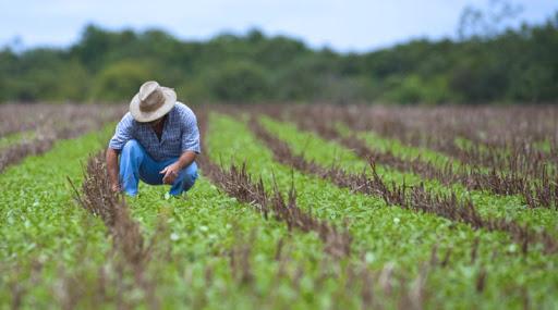 Carlos César Floriano explica importância do seguro rural