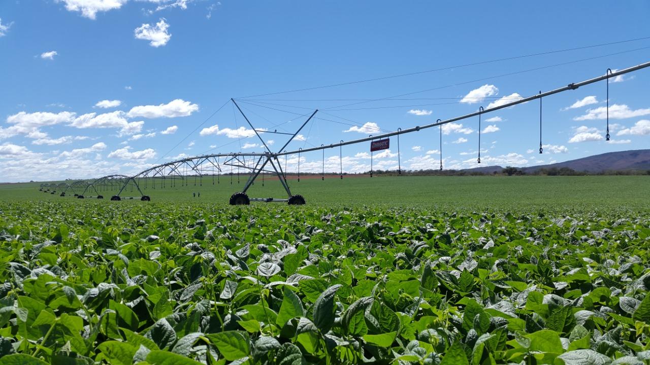 Carlos César Floriano explica que valor da produção agropecuária chega a R$ 742,4 bilhões